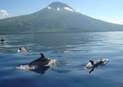 MD Observação de Cetaceos (partida do cais da Madalena) | Pico