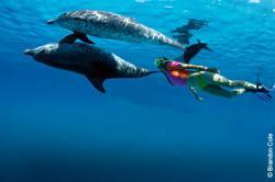 Natação com Golfinhos