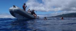 MD Natação com Golfinhos | Pico