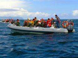 MD Observação de Cetaceos | São Miguel
