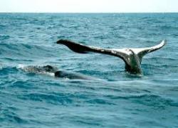 Observação Cetáceos
