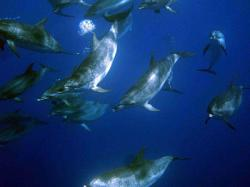 Natação com golfinhos | Ponta Delgada