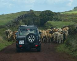 4x4 Jeep Safari Tours