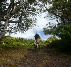 MD BTT Tours - Biscoitos | Terceira